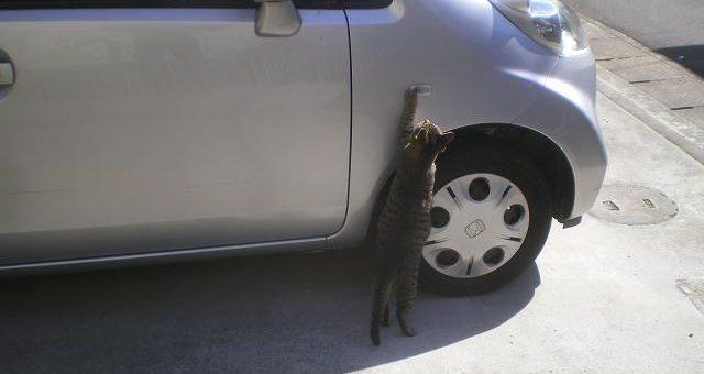 Oferuję renowację felg zabytkowych aut