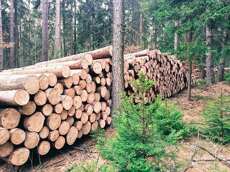 Usuwanie drzew przez wykwalifikowanych pracowników