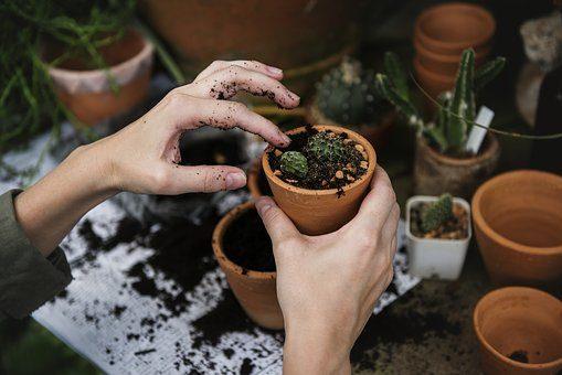 O fachowej pielęgnacji ogrodów