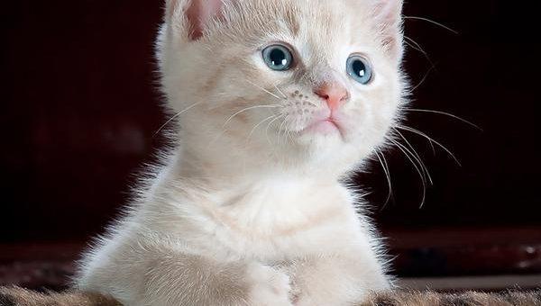 Czy hipoalergiczna karma dla kota jest dobra?