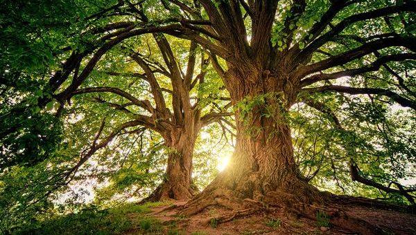 Jak usunąć drzewo?