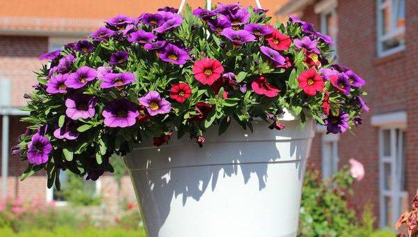Kwiaty w kolorowych i plastikowych doniczkach – sklep internetowy