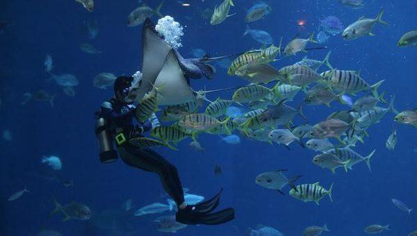 Ciekawe kursy nurkowania