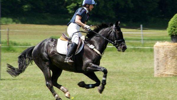 Jeździectwo – czy ochraniacze magnetyczne się sprawdzają?