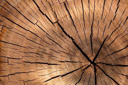 Dobre drewno do konstrukcji budynków