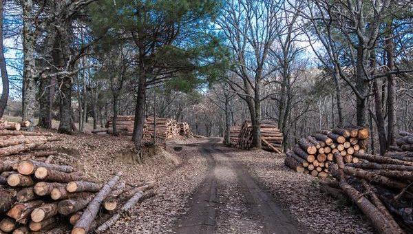 Profesjonalne urządzenia do cięcia drewna